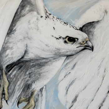 'White Gyr Falcon Swoop from the West' 100cm x 100cm