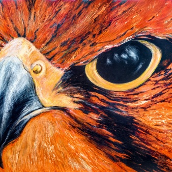 'Head of Lanner Falcon in Red' 122cm x 184cm Acrylic on canvas