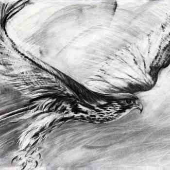 'Saker Falcon Flight' Charcoal drawing 55cm x 78cm
